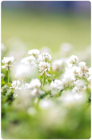 aroma garden