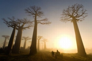 56.national geographic moments 26