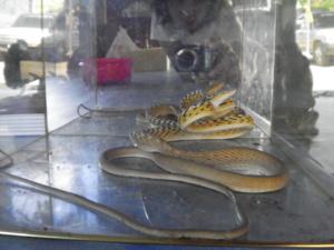 งูคู่บารมี