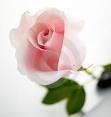 ดอกไม้3