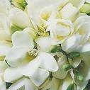 ดอกไม้4