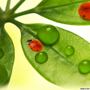 1288393295 ladybugs ipad wallpaper