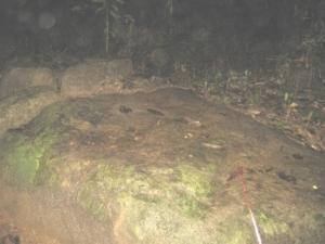 ดวงธรรมลานหิน2ตค53 ขนำน้ำตกบ้านลิพอน
