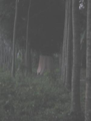 ป่าช้าเก่าท้ายเหมือง3