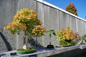 ฤดูใบไม้ร่วง (Fall) อีกมุมหนึ่งในสวนบอนไซใน Arboretum หรือบางทีเรียก Botanical Garden ในเมือง Asheville, North Carolina