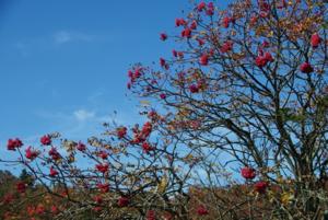 นี่เป็นบริเวณสวนในคฤหาสน์ใหญ่ที่เรียกว่า Biltmore Estate ใน Asheville, North Carolina