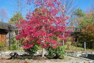 ฤดูใบไม้ร่วง (Fall) ใบไม้เริ่มเปลี่ยนสี นี่เป็นศูนย์สำหรับนักท่องเทียวในเมือง Asheville, North Carolina
