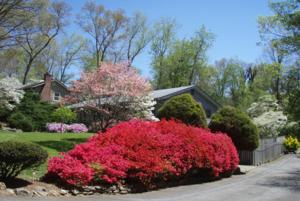 หน้าฤดูใบไม้ผลิ (Spring) แถบข้างบ้านใน Asheville, North Carolina