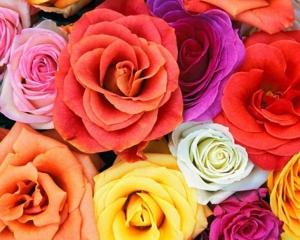 Rose Garden Homestead
