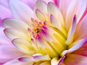 Flower Wallpaper flowers 249402 1024 768