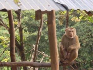 เจ้าลิงตัวน้อย แต่ก็ดุเอาเรื่อง
