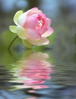 lotus44