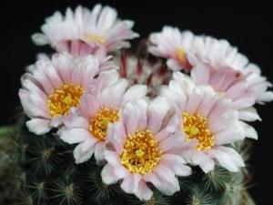 47739 photo big cactus 145