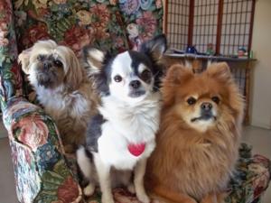 pups at home 006