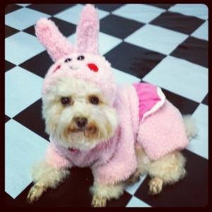 กระต่ายหมา..อิอิ