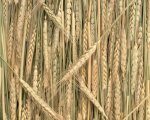 Rice Field 8 WCL3YTL44P 1280x1024