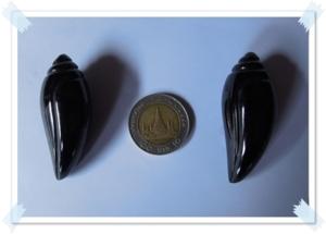 หอยสังข์สีดำ