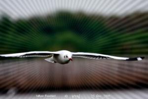 นกในเมืองไทย