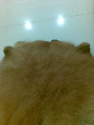 My dog ลูลู่