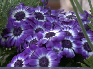Color Enrich Violet