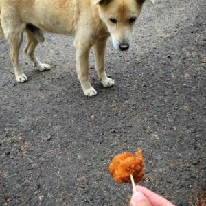 น้อหมาที่วัด คงหิวน่าดู