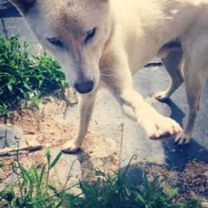 Shake my hand please