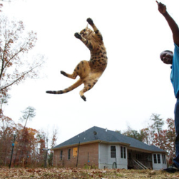 19cats1 articleLarge