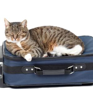 article cat plane travel