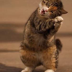 Cat Dance 6