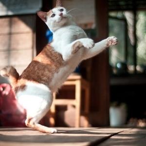Cat Dancing in the Sun