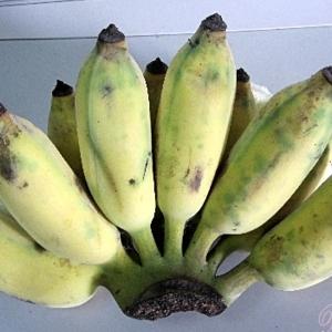 กล้วยน้ำหว้า