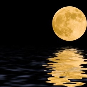 moonlightq