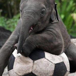 ป๋มอยากเล่นบอล...ใครจะเล่นกับผมมั่ง