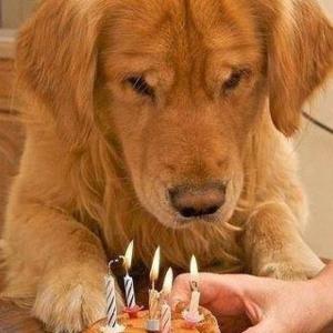 สุขสันต์วันเกิด...รักนะเจ้าตูบ