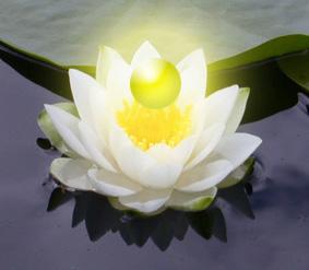 Lotus[277]