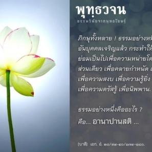 IMG 0966