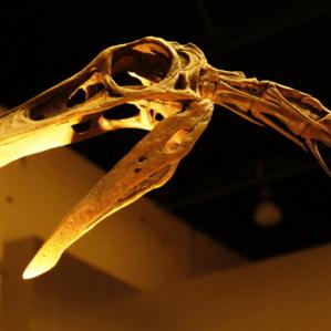 อุทยานไดโนเสาร์ ภูกุ้มข้าว - พิพิธภัณฑ์สิรินธร