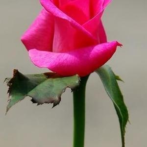 ดอกไม้ให้คุณ